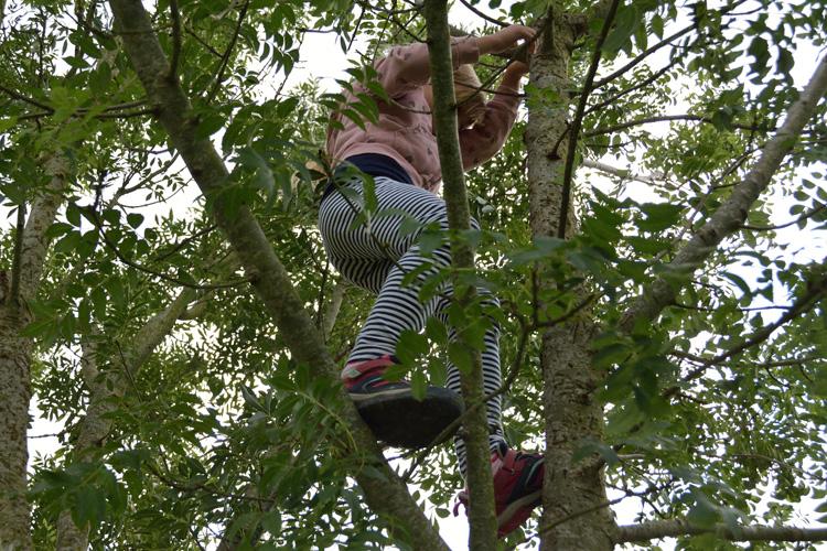Deutsche Schule Toulouse, Bewegungsfest Kind im Baum